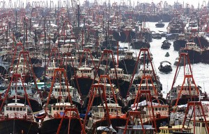 Overfishing-lots-of-boats